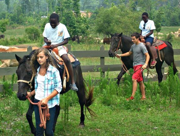 horse uganda
